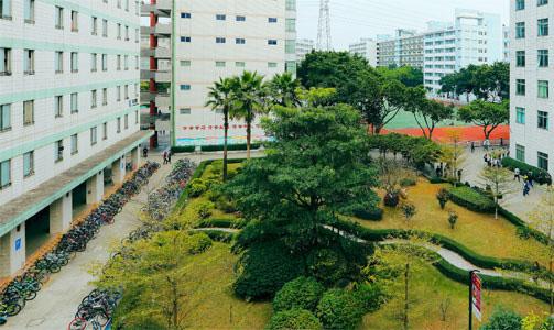 学校楼之间绿化